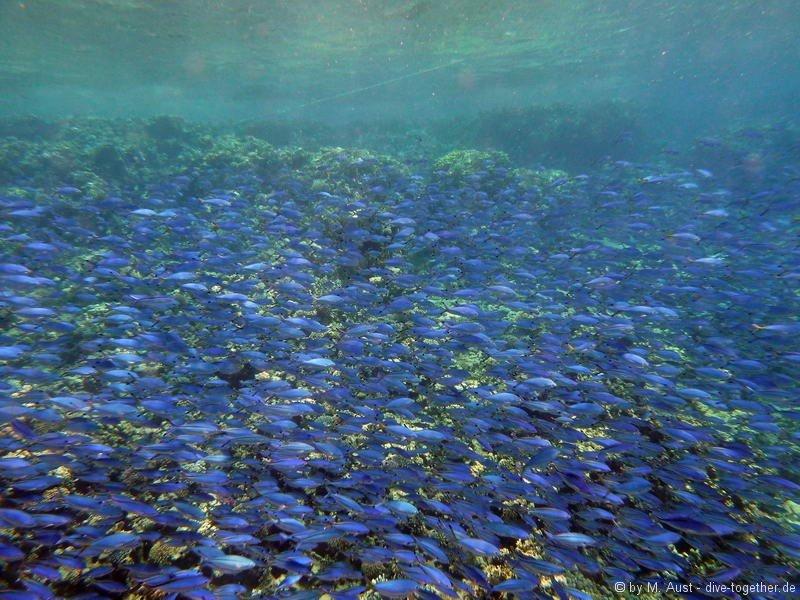 Füsiliere am Gordon Reef